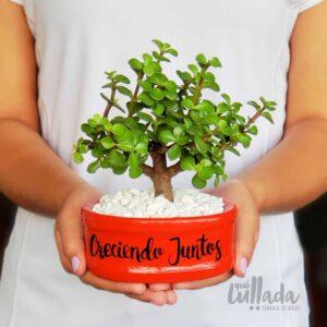 bonsai jade arbol de la prosperidad