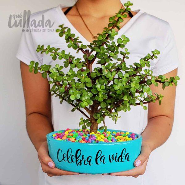 super bonsai