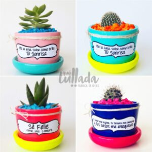 Cactus y Suculentas para Regalar