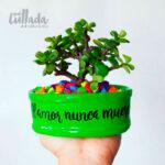 Mini maceta verde piedras colores