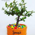 Mini maceta naranja piedras colores