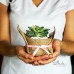 Cactus y Suculentas Rústica